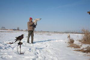 raptor bird control dissuasori volatili